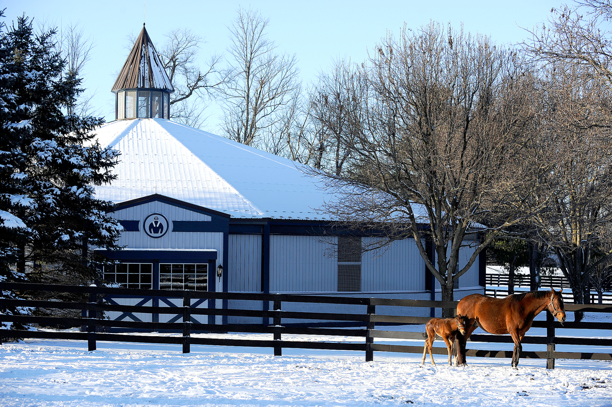 Horses during winter in Kentucky Elliott Hess Photography