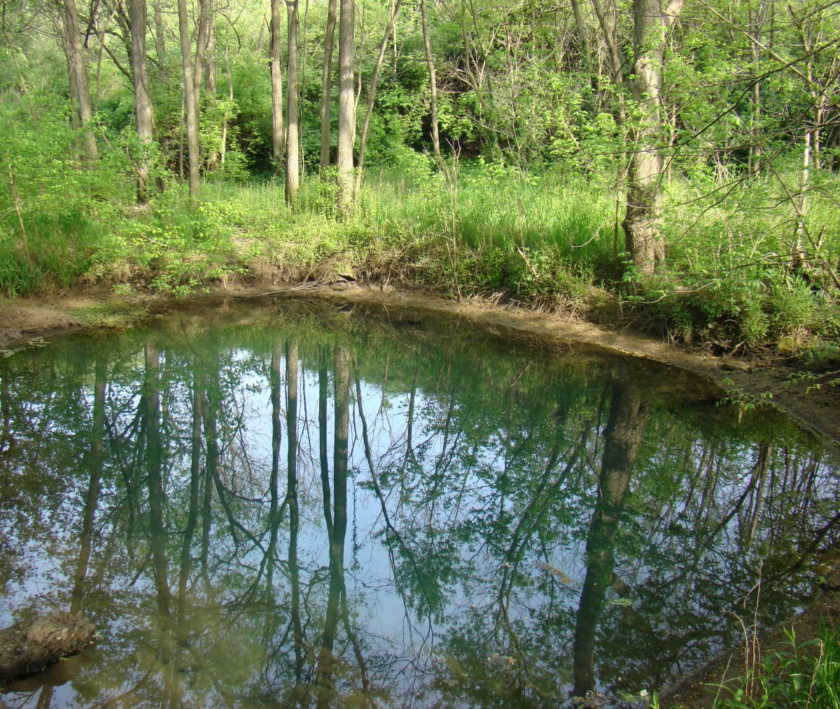 McConnell Springs Lexington Kentucky Blue Hole